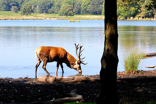 Richmond Park-2