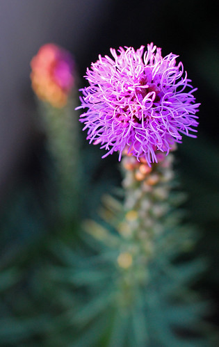 summer vacation plant nature nikon bokeh idaho 2008 mccall nikond40