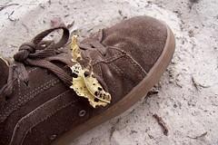 leaf/shoe