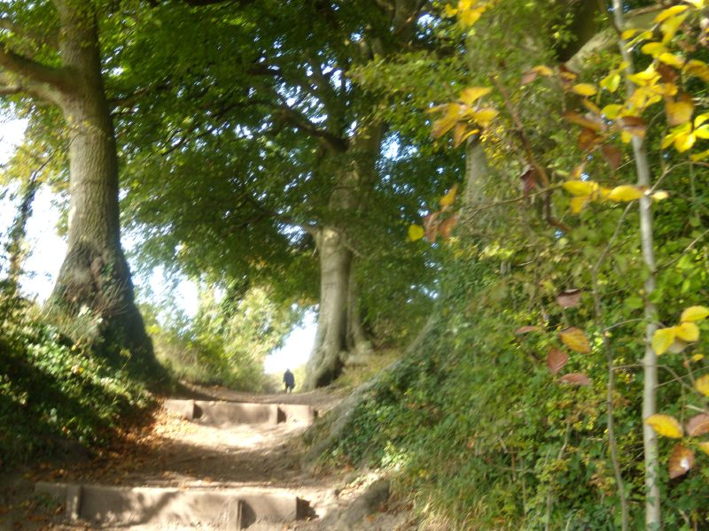 Steps'n'trees Pangbourne Circular