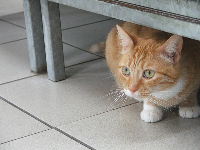 Cat Re Homing From Private Houses
