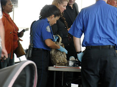 TSA at Gate B8
