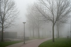 drizzle(0.0), snow(0.0), winter storm(0.0), blizzard(0.0), freezing(0.0), fog(1.0), branch(1.0), winter(1.0), tree(1.0), haze(1.0), mist(1.0),