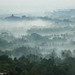 Misty Morning @ Borobudur