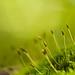 moss green   ;-) by Nancy Rose