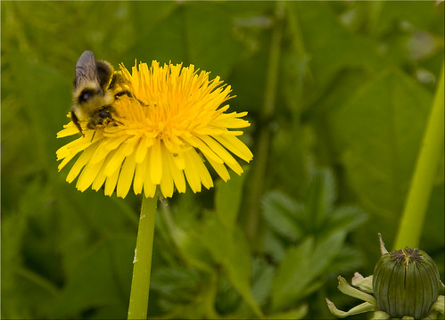 Juneau Bee