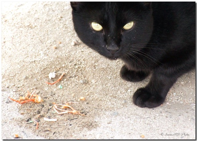 nutrition - Is fish-flavored cat food bad/dangerous to a ...