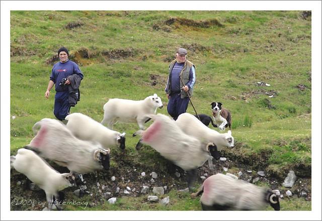 Men, Dogs & Sheep