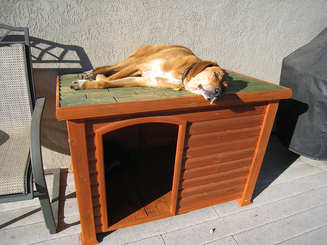 Rusty on his dog house