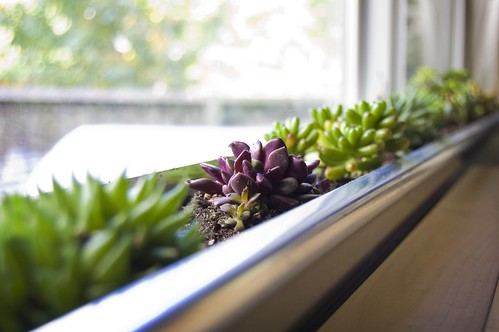 DIY Windowbox Planter