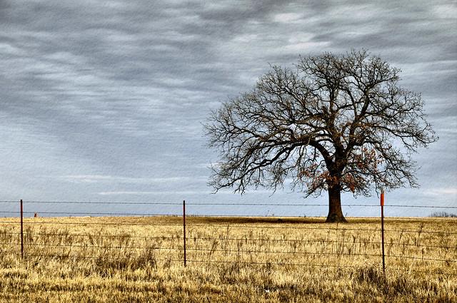 Dsc 9370 Lone Oak Tree Landscape Photography Winter Sky Ranch Barbed Wire Fence A Photo On