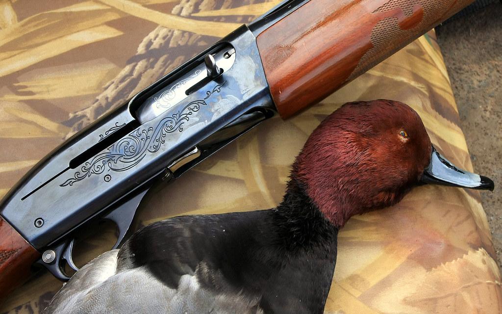 Shotgunworld com • Remington 1100 for hunting ducks?