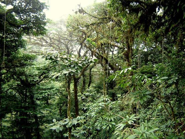 Reserva biológica Bosque Nuboso Monteverde, Costa Rica.
