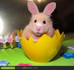 Easter Bunny Chmurka
