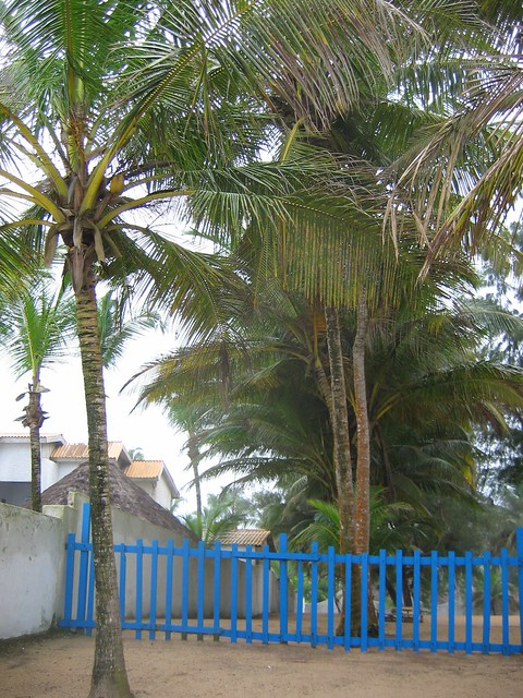 Blue fence and palm tree flickr photo sharing