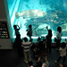 20080724 Aquarium 10 (オレって人気者?)