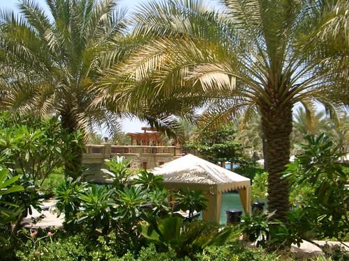 Desert greenery