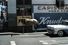 Horse on Verdugo St., San Juan Capistrano, circa 1960