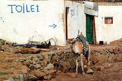 Camel Loo