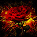 Grunge Rose 6