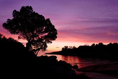 sunset sea tree beach geotagged nikon corse corsica dxo 1224 meditteranean d80 tizzano corsetravelr geotagcorsetravelr geo:lat=42039604 geo:lon=9012893