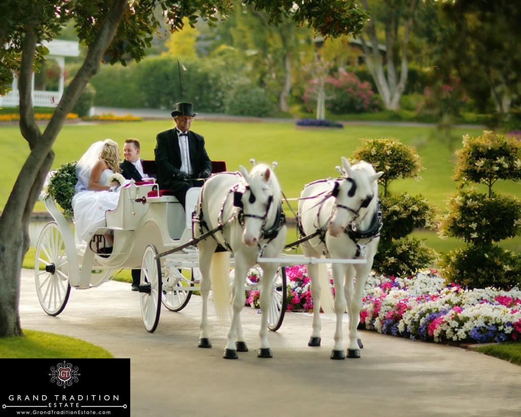 Horse Drawn Carriage Wedding Wedding Ceremony Horse Drawn