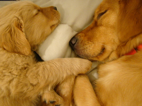 Sharing the bed...tooo cute!!!