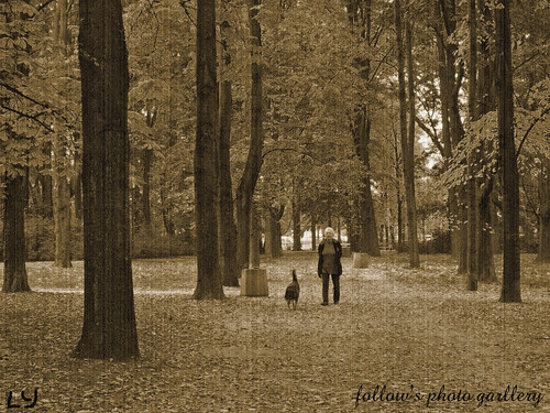 travelling nature sepia blackwhite europe poland nostalgic 旅游 风景 黑白 欧洲 怀旧 波兰 自然风景