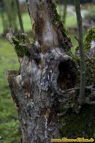 hilfe unser apfelbaum hat ein loch. Black Bedroom Furniture Sets. Home Design Ideas