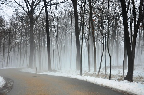 road trees winter white snow black fog forest woods day explore 500views 600views 700views mortonarboretum fogandrain fbdg theinspirationtree natureandnothingelse aspiretoinspire nikond90club essavalepormilpalavras reallycoolphotos nikonspecial