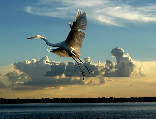 ----Heron and sunset.----