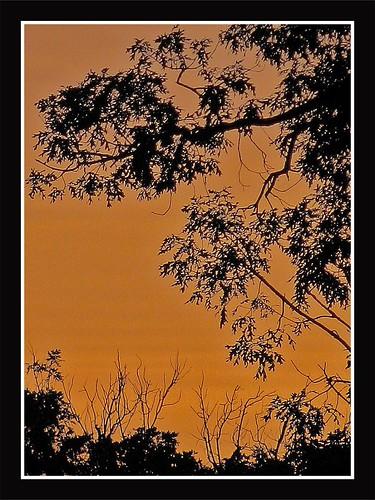 morning trees usa clouds arlington sunrise virginia unitedstates south northamerica northernvirginia maywood southernunitedstates arlingtoncounty scoreme34 maywoodneighborhood 2135nmonroestreet