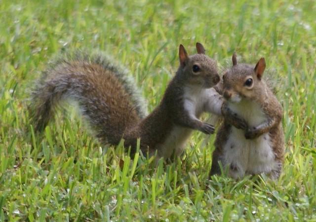 Cute squirrels in love - photo#25