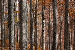 Colori d'autunno 6
