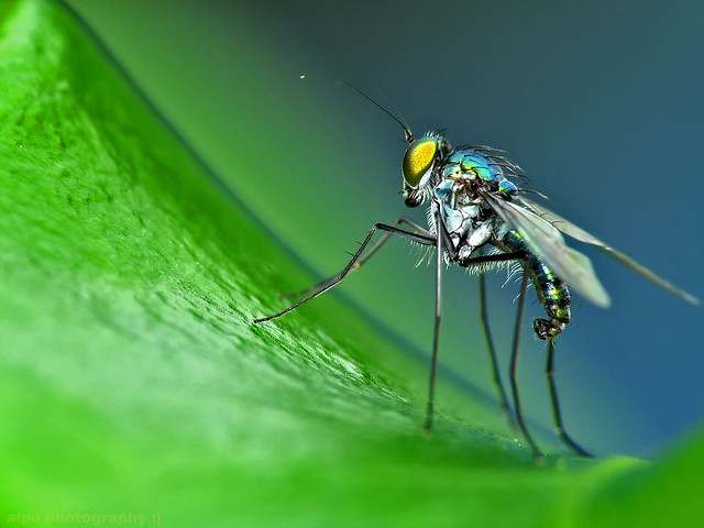 25 Insanely Detailed Macro Images Of Insects