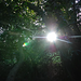 Timelapse #4 - Sun Through Trees (04.03.2008)