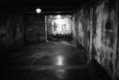 Auschwitz 1999