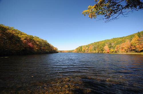 lake tree water leaves massachusetts beartownstateforest sigma1020mmf456exdc