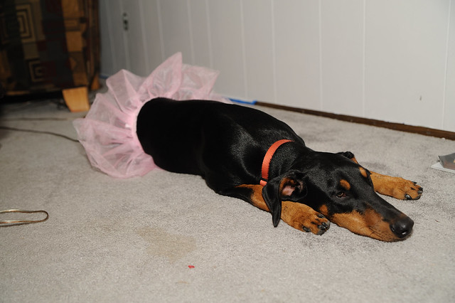 Sasha and her Tutu