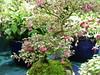 Gardening Scotland 2011