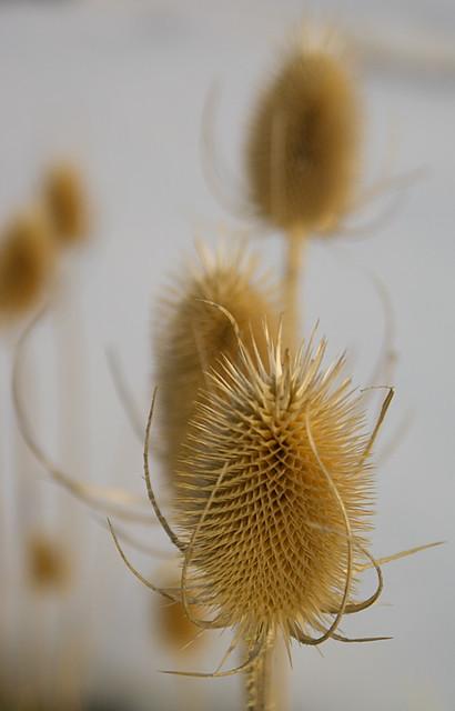 Oregon Native Seed