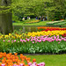 Tulip garden in keukenhof holland