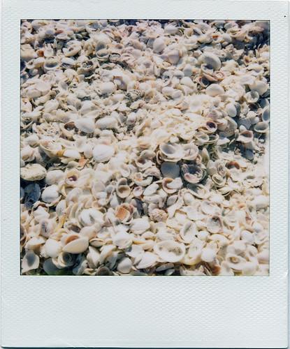 an insane amount of sea shells.