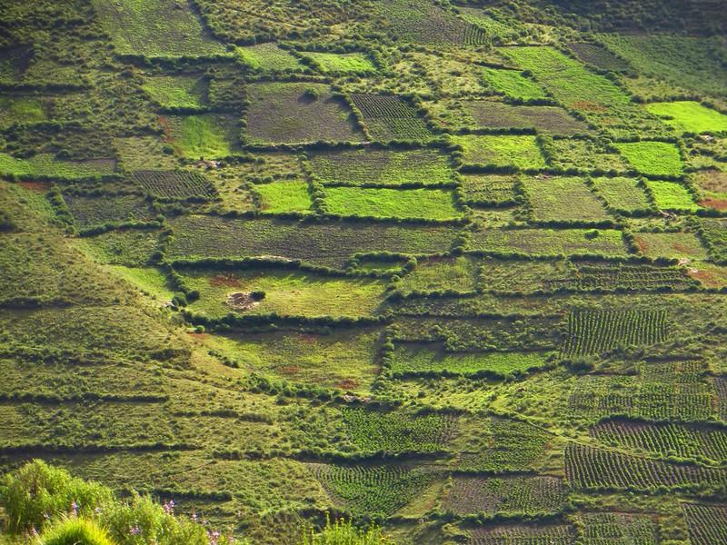 Fields near Paso del Mojon