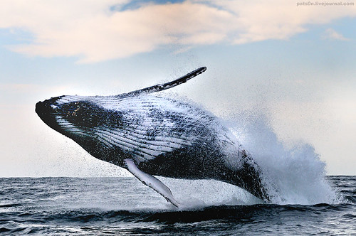 southafrica whales humpbackwhale wowфотонауф
