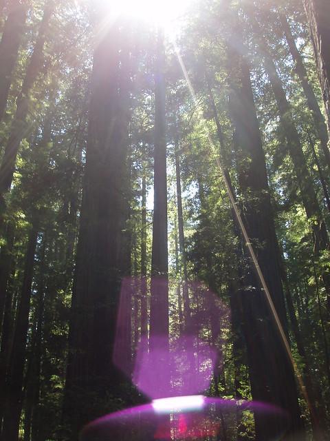 080308 Albee Creek Redwoods - God's summer home