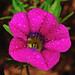 Wet Flower by Andrew Ball