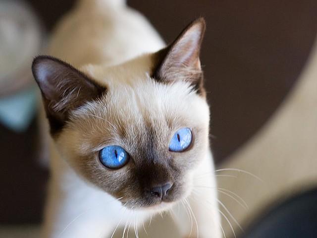 emoneycats_018