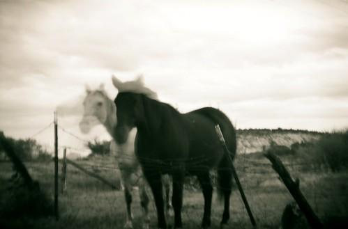 boulder utah horses- black & white