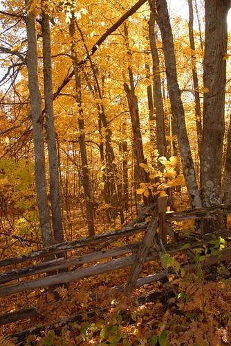 autumn ontario canada fall october lanarkcounty